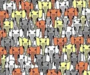 Encuentra el Panda en Menos de 2 Minutos