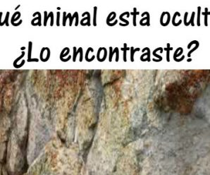 Reto para Expertos: Descubre al animal que se Esconde