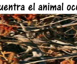 Encuentra al Animal Escondido