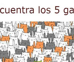 Encuentra los 5 gatos en la imagen