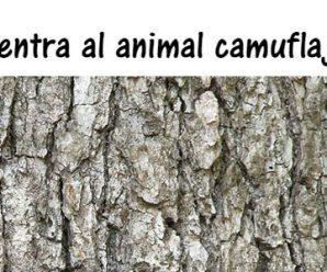 Encuentra al animal camuflajeado en 30 segundos.