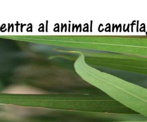 Encuentra al animal escondido en 30 segundos